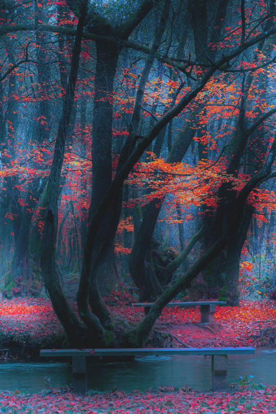 n autumn forest