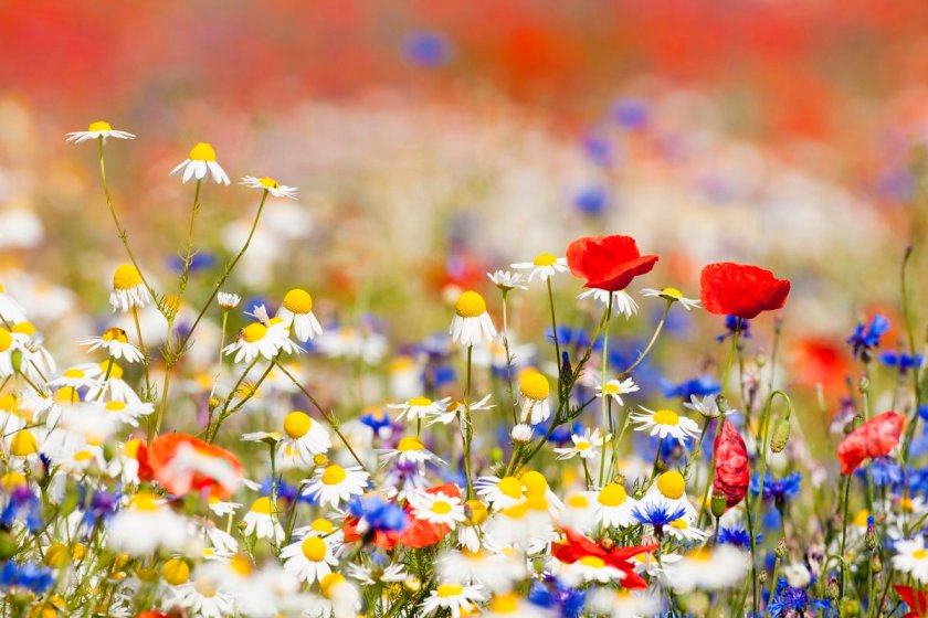 n meadow