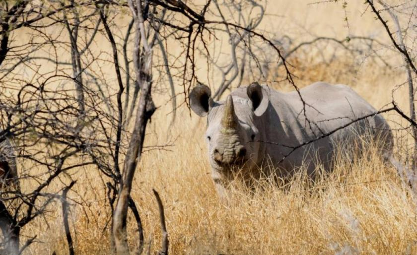 n rhino