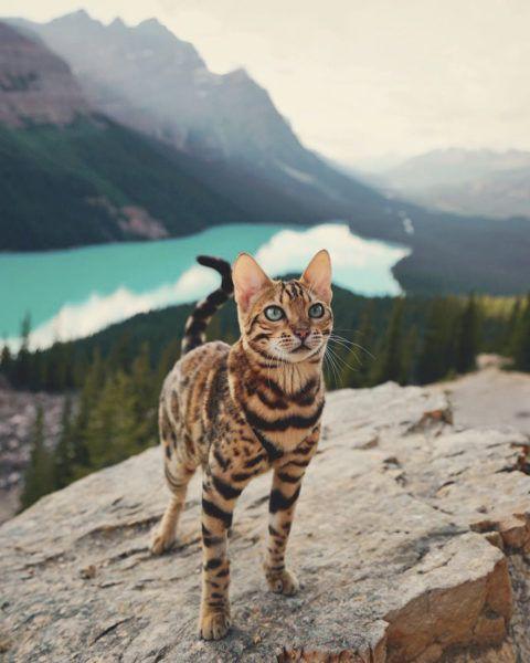 n cat1