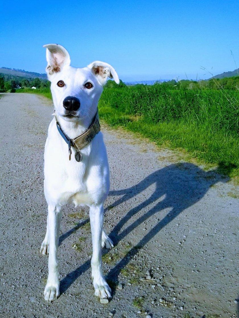 n dogy