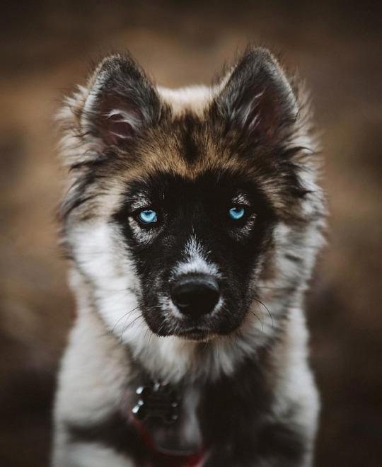 n blue eyes