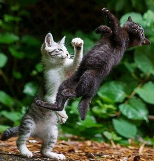 n catfight