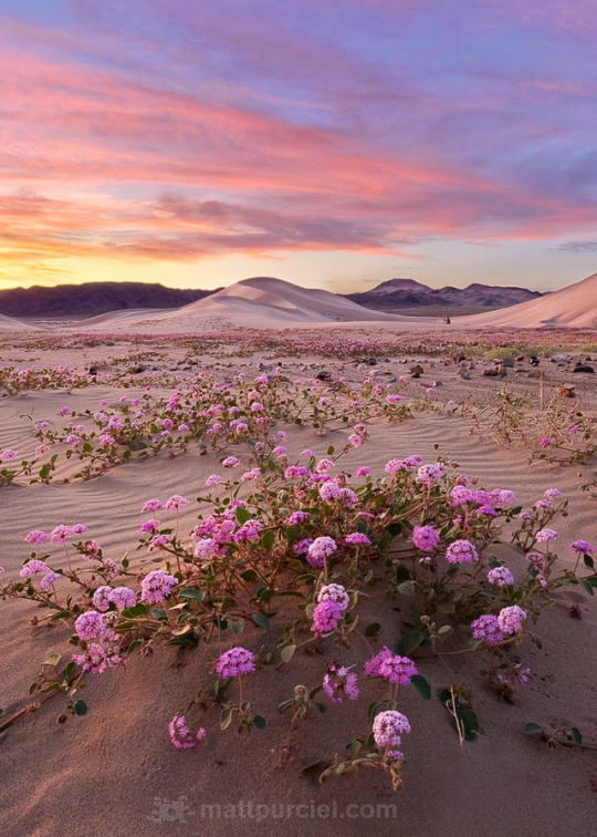 n desert