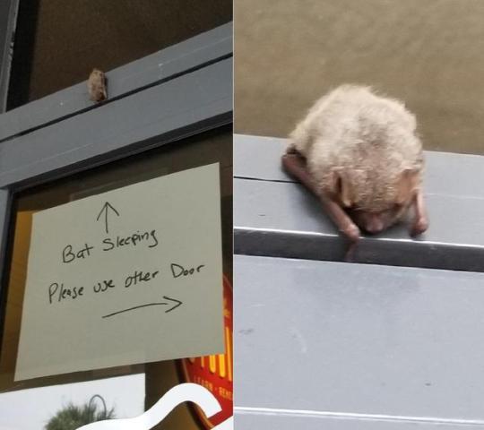 n bat