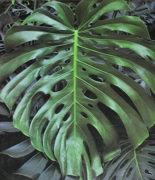 n leaf