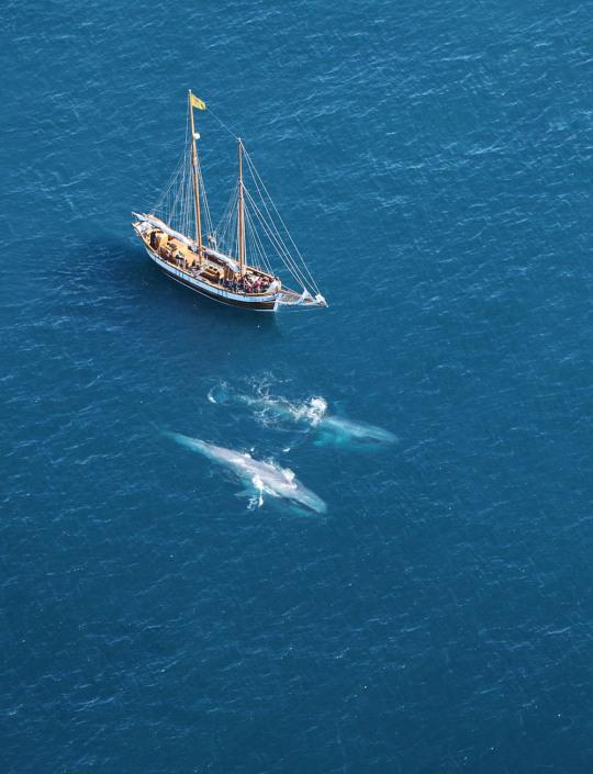 n whalesdolphins