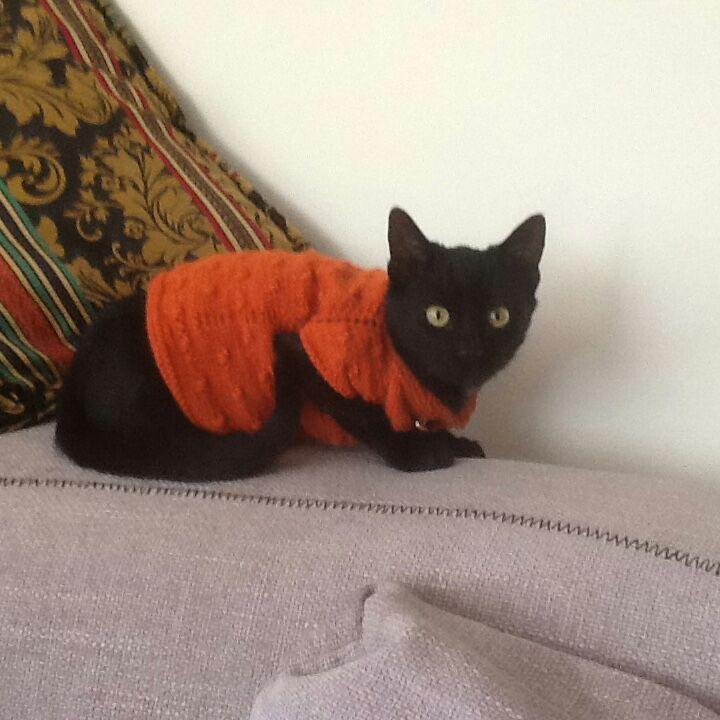 ss john's cat charlie