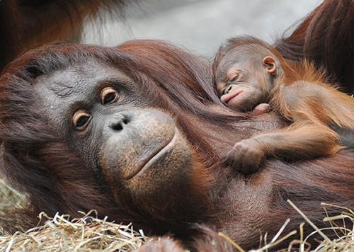 n comfy mum