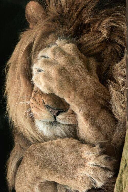 n lion tm
