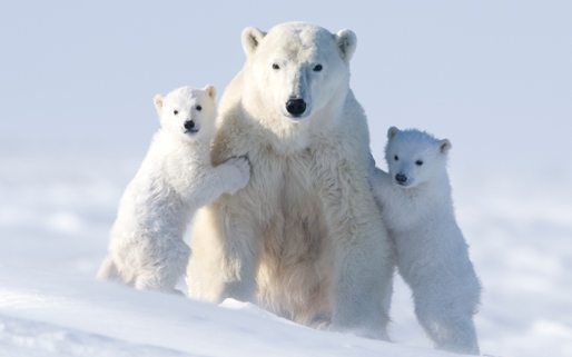 n polar