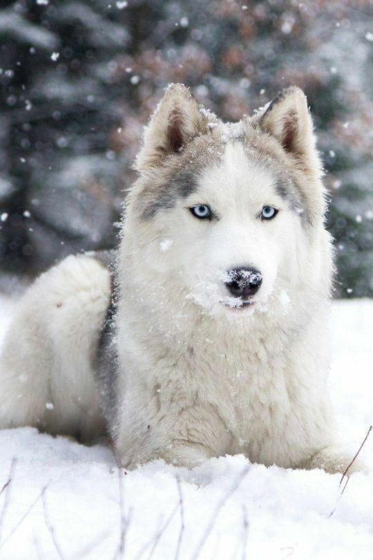 n snow