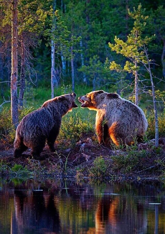 n bears.jpg
