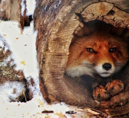 n foxhole