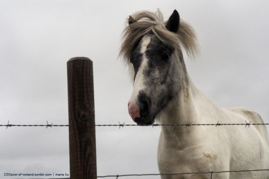 n horse