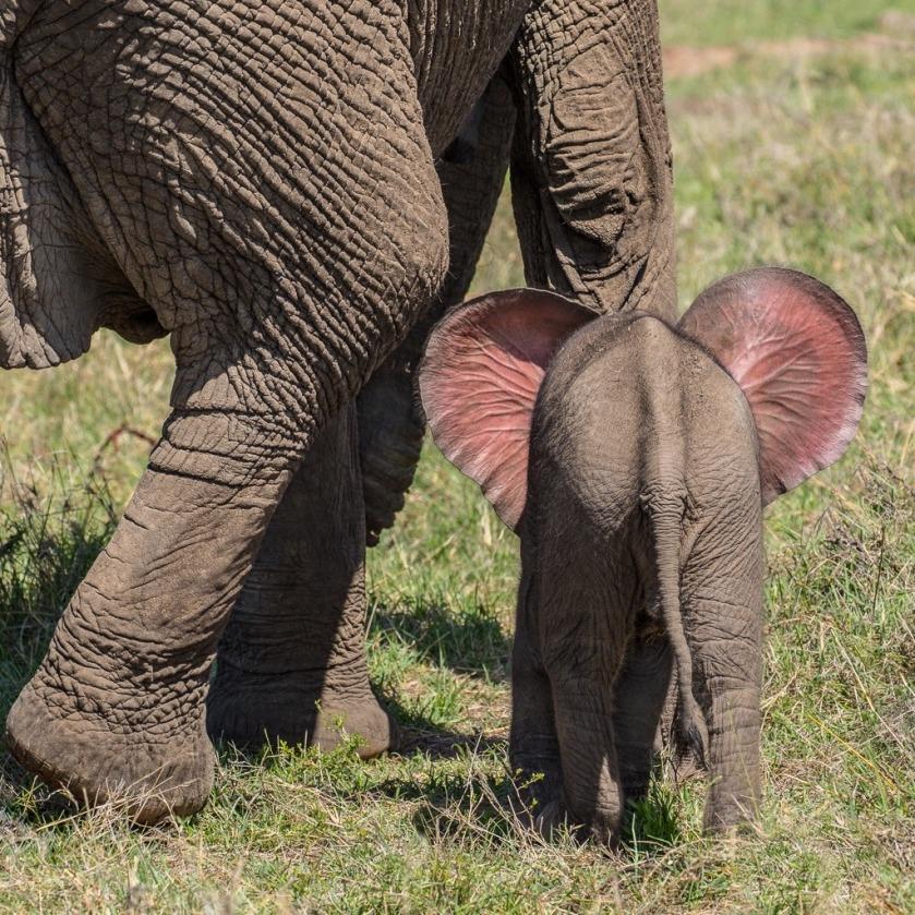 n elephant 3 days