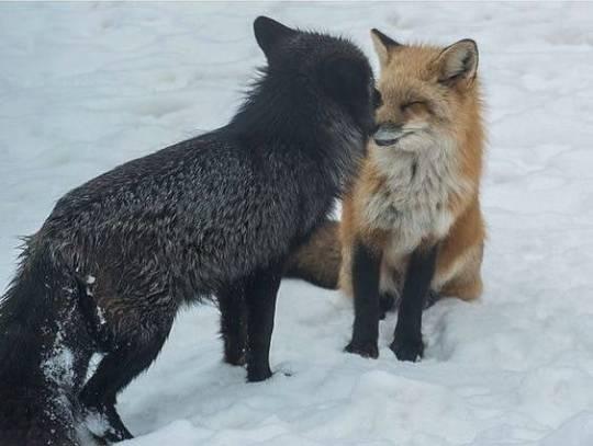 n fox kiss