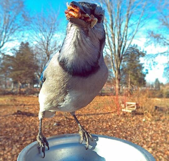 n greedy bird