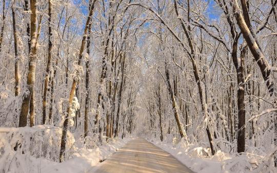 n winter11