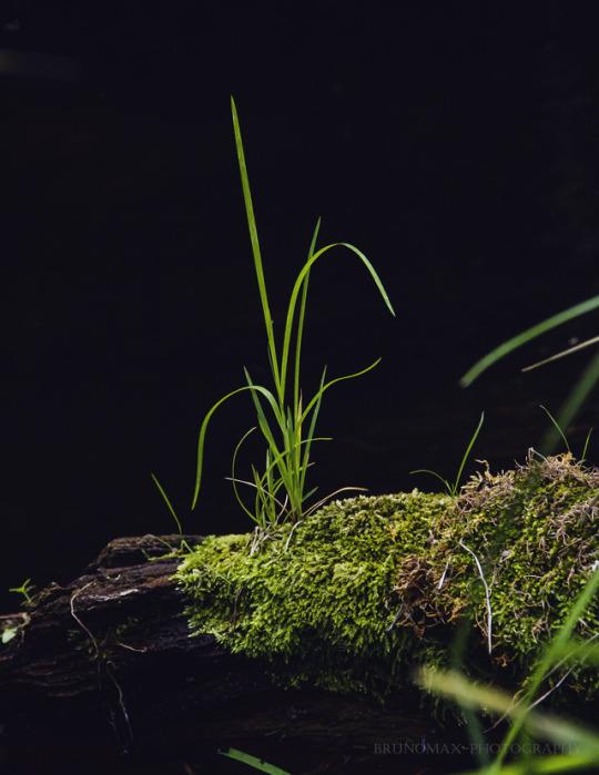 n grass