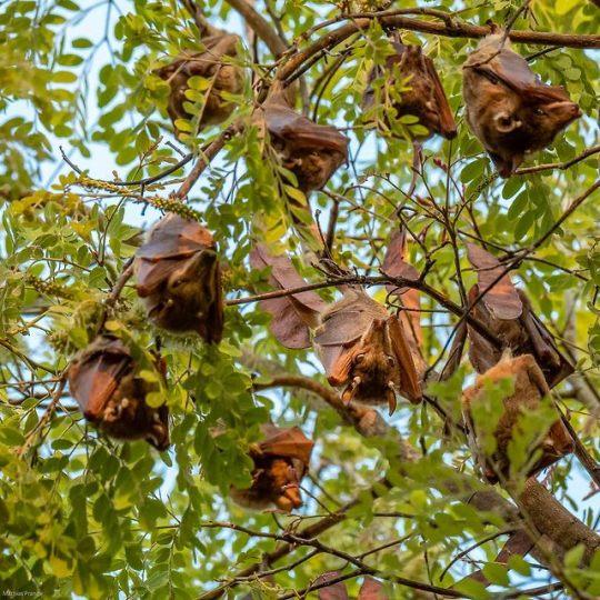 n bats