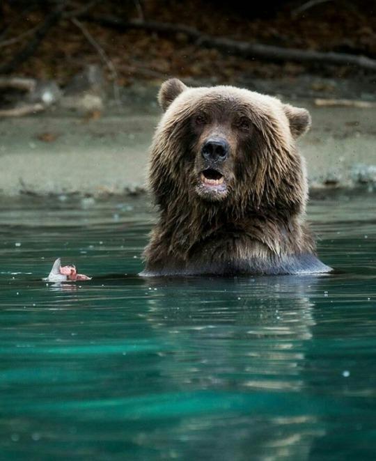n bear 2