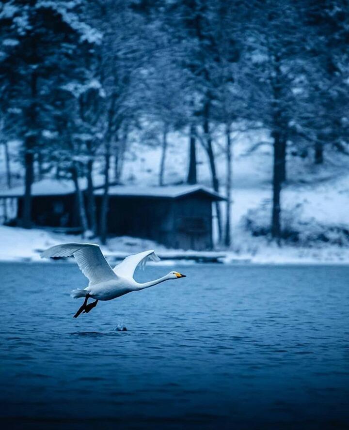 n fin swan