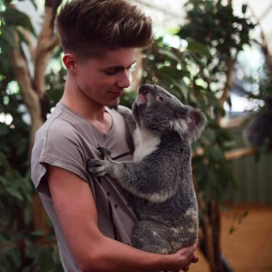 n koala