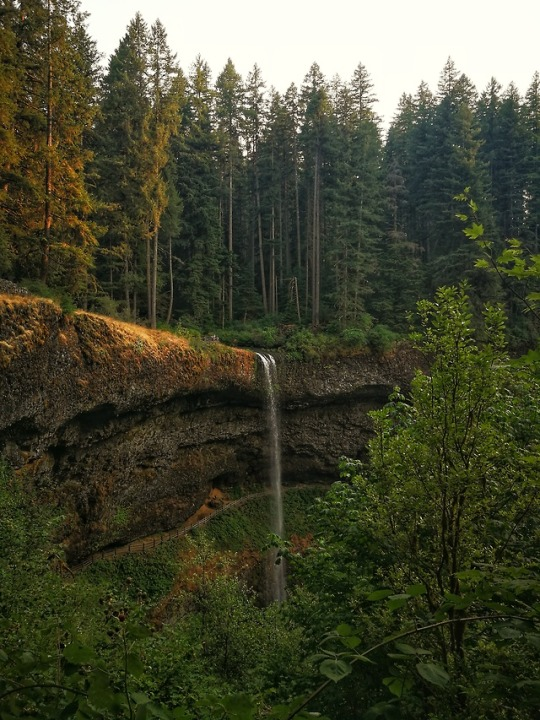 n silver falls oregon
