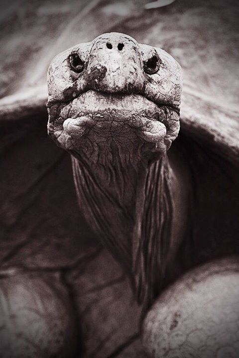 n tortoise