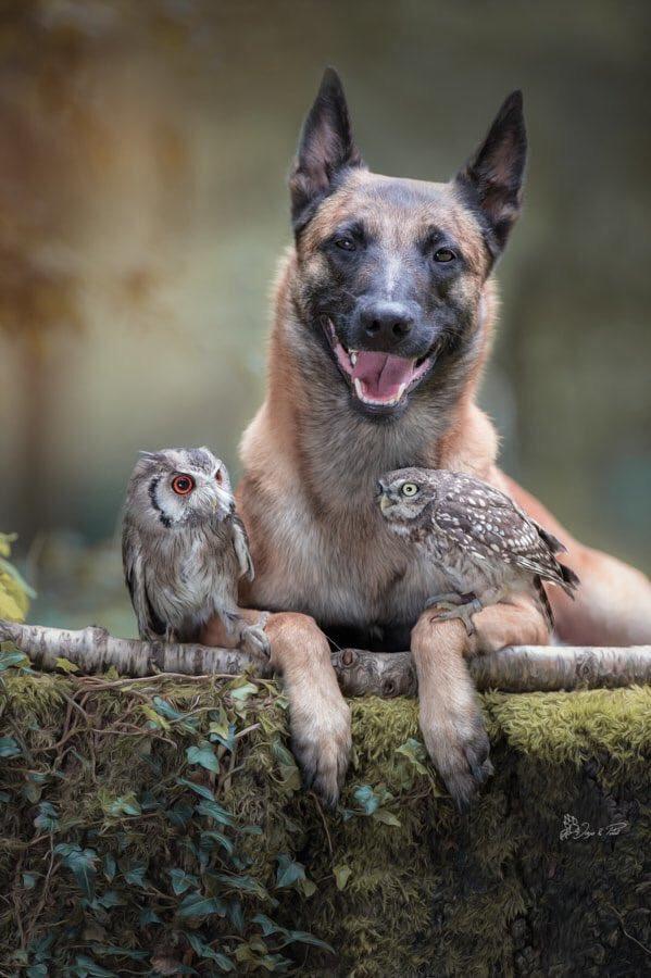 n dogmate