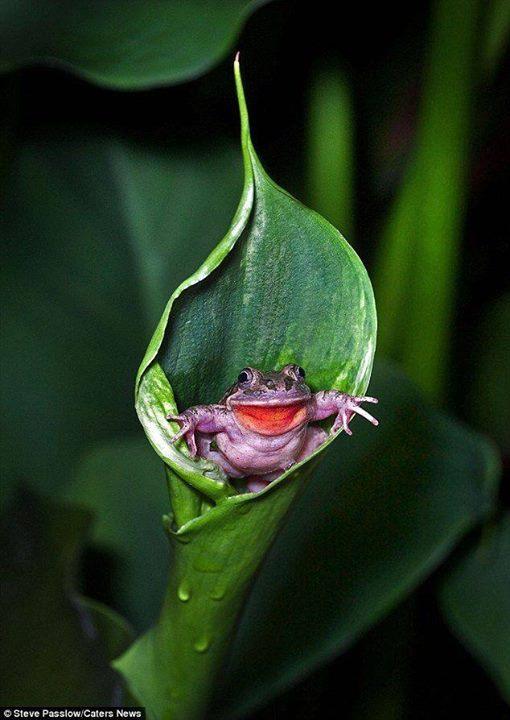 n toad