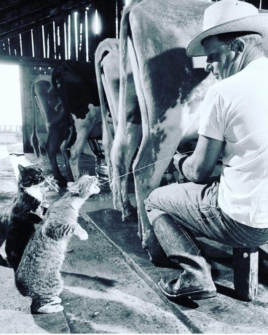 n milk