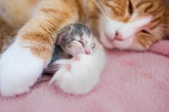 n mum cat