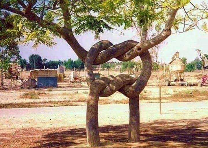 n tree