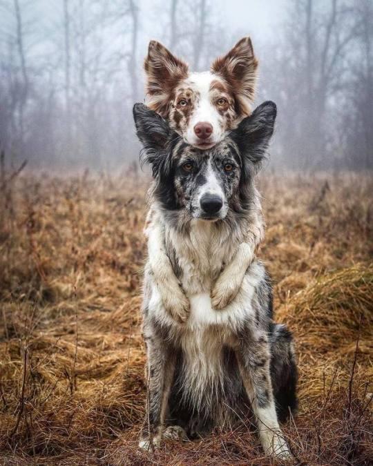 n dogmates