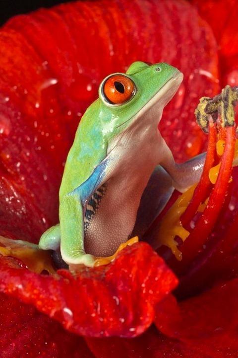 n frog