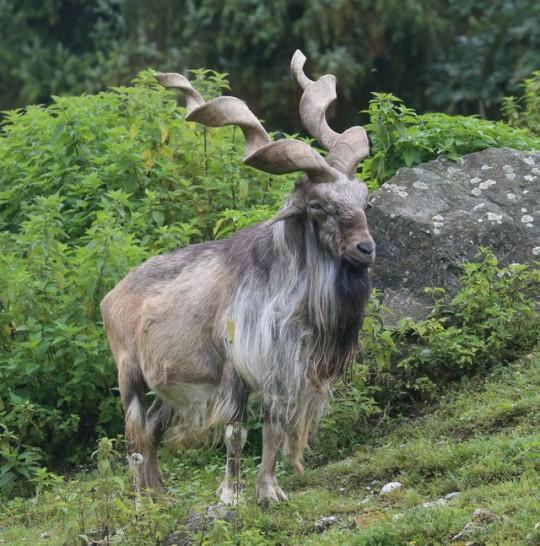 n horns