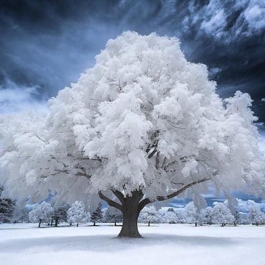 n frost tree utah