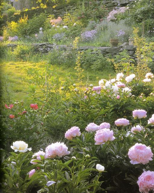 n garden p