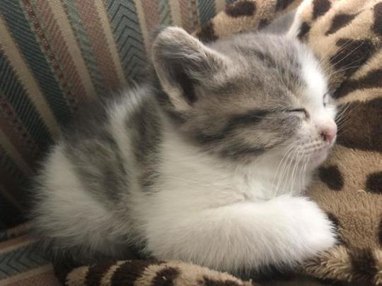 n kitten