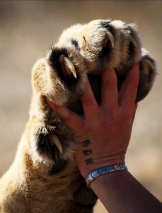 n paws