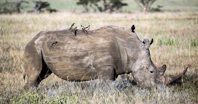 n rhino bus