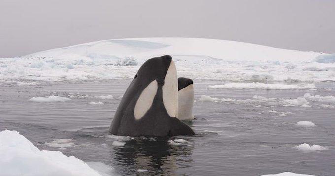 n whale