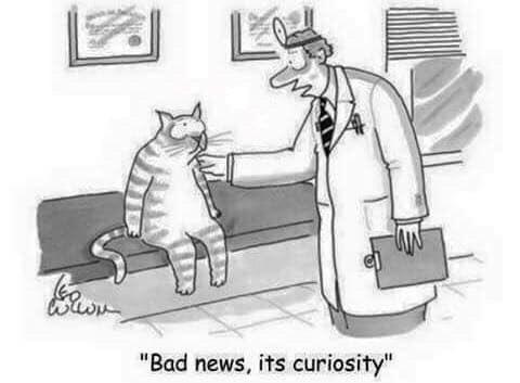 joke cat
