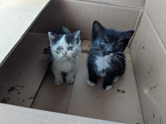 n barn cats