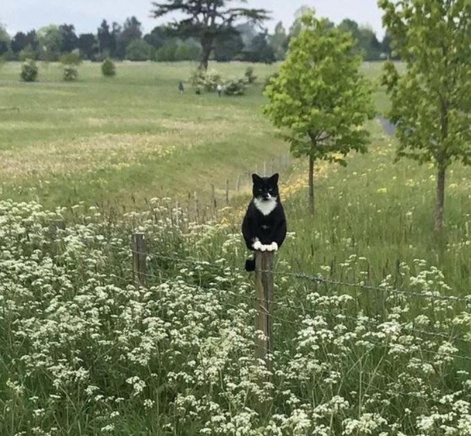 n cat on a post panda