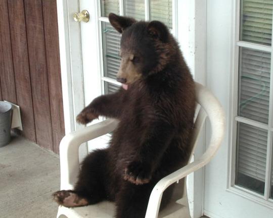 n porcvh bear