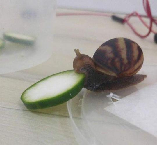 n snail