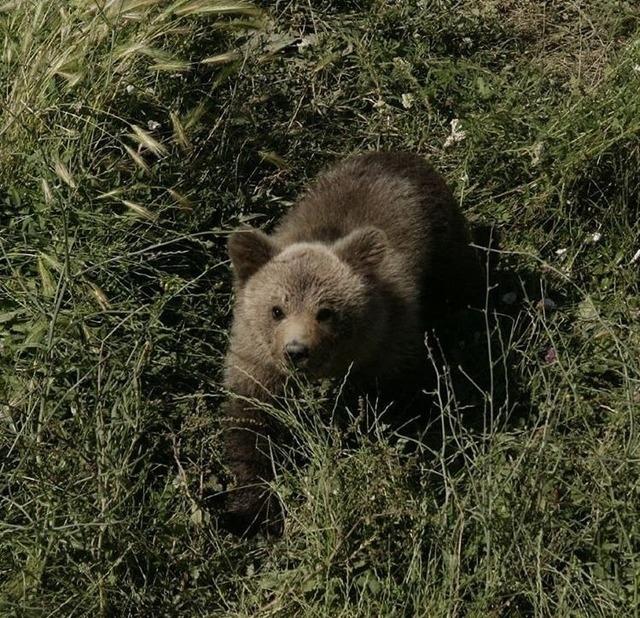 n bear1